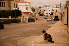 qattus (pattcatz) Tags: street cat malta fotografia tamron animalplanet kot maciej maciek marsaxlokk ulica cybulski canoneos60d pattcatz