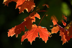 Autumn Light (rosyrosie2009) Tags: uk autumn red england orange beautiful photography cornwall bokeh tamron looe westcountry d5000 tamronaf70300mmf456dildmacro tamron70300mmlens rosiespooner rosyrosie2009 rosemaryspooner rosiespoonerphotography
