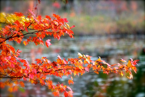 Autumn NH Pond by jennymcb
