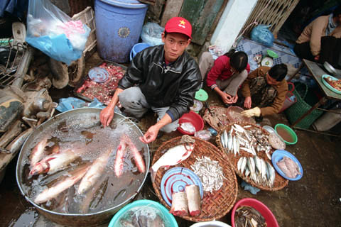 Fish market, Vietnam. Photo by Dominyk Lever, 2004