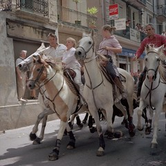 (aDavidScott) Tags: horses france 120 film mediumformat square kodak south bulls analogue sqa ektar lacamargue torreau bronic