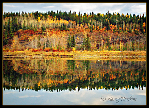 Mirror Image by Nancy Hawkins