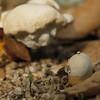 Autumn's coming II (Solomulala | mostly weekends ;-( !) Tags: autumn brown macro fall mushroom closeup canon herfst 7d otoño seta tamron90mm solomulala murielcdejong