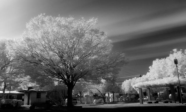 008/365 Infrared Landscape