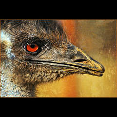 emu . . . (dragonflydreams88) Tags: sailsevenseas sbfmasterpiece dragonflydreams88