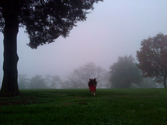 foggy run