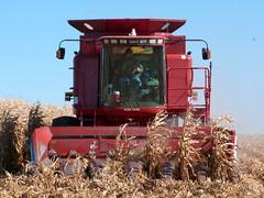 Case IH 2388 Combine on 10-21-2011 (basicbill) Tags: field illinois corn farm harvest equipment machinery fields farmer agriculture wwwbasicbillcom