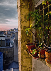 Seven Stories Up (Kyle Hickman) Tags: autumn roof sunset summer vacation sky plant paris france fall window metal clouds buildings apartment outdoor vine september pot residential 2011