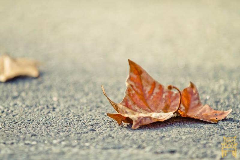 Leaves_0005