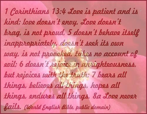 1 Corinthians 13 behind rose, excerpt
