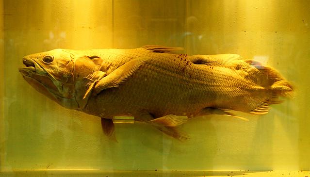 nsm fish