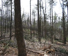 View from the same poplar tree immediately after the area was cut.