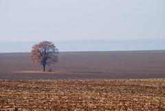 Kedvenc fm sszel - My favourite tree in autumn (Adam Tomk) Tags: autumn tree landscape fa tjkp sz kerecsend