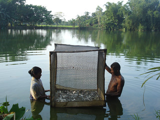 Fishing, Bangladesh. Photo by WorldFish, 2008