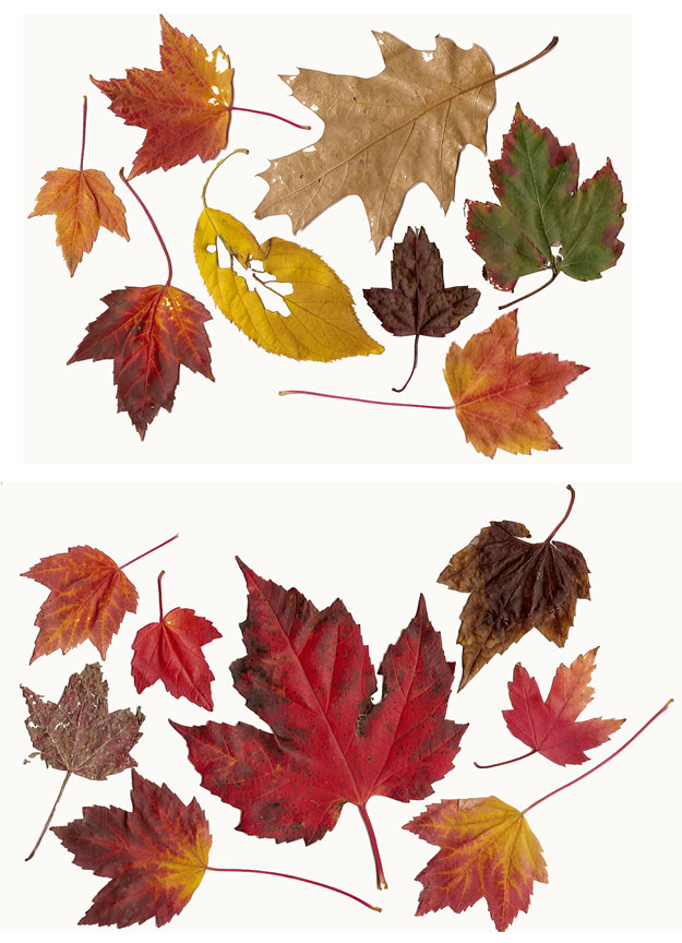 fall-leaves-combined