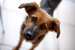puppies can... (anna pozzi) Tags: dog puppy eyes ears ldlportraits
