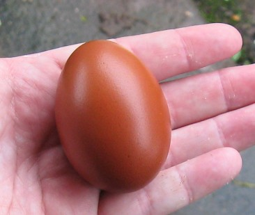dark brown egg
