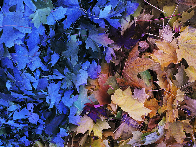 Autumn Blues Encroach on the Leaf Pile