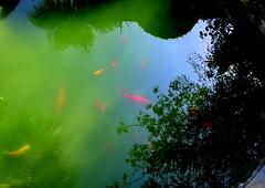for escher (dmixo6) Tags: sunlight fish reflection strange beauty lines spain curves layer dugg dmixo6