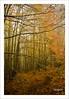 nel bosco in autunno (Andrea Rapisarda) Tags: wood italy mist fall nature colors foglie nikon italia ngc natura sicily nebbia autunno sicilia nationalgeographic bosco parcodeinebrodi d7000 andrearapisarda