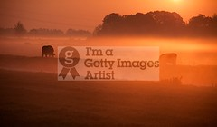 Cows In The Mist II (DolliaSH) Tags: morning light sunset orange sun mist holland color sol nature colors misty fog sunrise canon photography dawn lights soleil photo zonsondergang europe tramonto foto sonnenuntergang cows photos nederland thenetherlands sole sonne 18200 coucherdesoleil puestadelsol zuidholland zakat southholland 50d canoneos50d solntse dollia canonefs18200mmf3556is sheombar dolliash