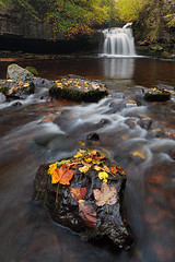 Cauldron Force (rgarrigus) Tags: autumn trees england nature leaves river landscape rocks stream yorkshire foliage tse yorkshiredales westburton greatphotographers bishopdale garrigus cauldronforce robertgarrigus robertgarrigusphotography