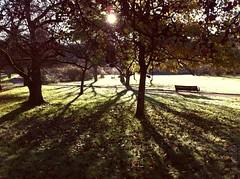 11.11.11  shadows (martina★linnea) Tags: autumn göteborg höst 111111 botan botaniskaträdgården 2011 iphoneography