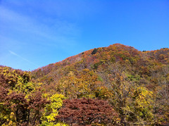 OIRASE DAYS (junog007) Tags: blue autumn sky mountain color tree water forest leaf stream trail aomori vapor autumnalleaves iphone oirase mountainstream