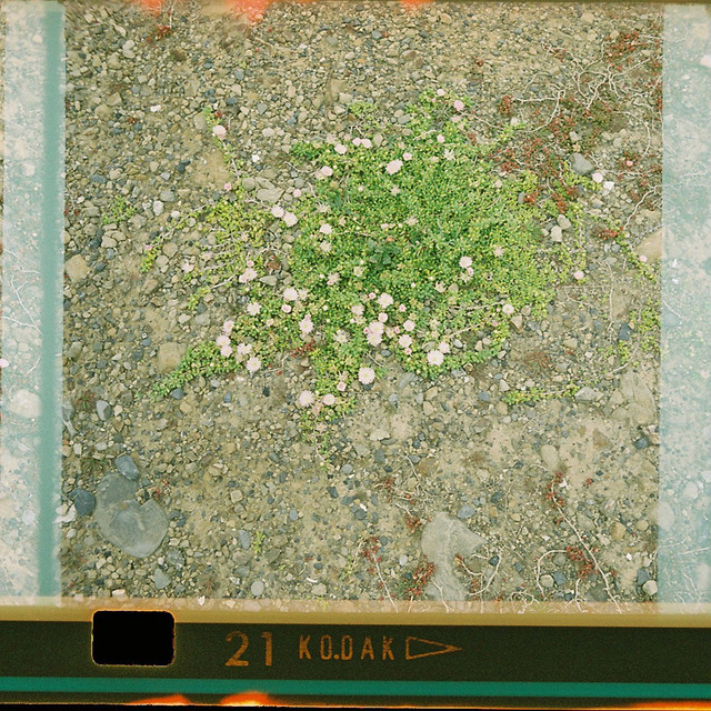 126-21_plants_2