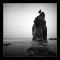 Refuge (scott masterton) Tags: light sea usa mist tree fog scott square mono la washington long exposure pentax stack lone push fascinating refuge masterton haar sigma1020mm nd400 ndx400 k200d