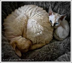 Blue Eyes (Artvet) Tags: