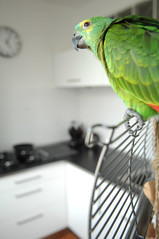 ____coco____ (Vladimr Kovanda) Tags: blue green bird girl amazon nikon 8 parrot coco f2 nikkor 1755 d2xs blufrontedamazon