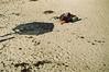 (federico van diest) Tags: fuji olympus papel litoral om1 algarrobo c200
