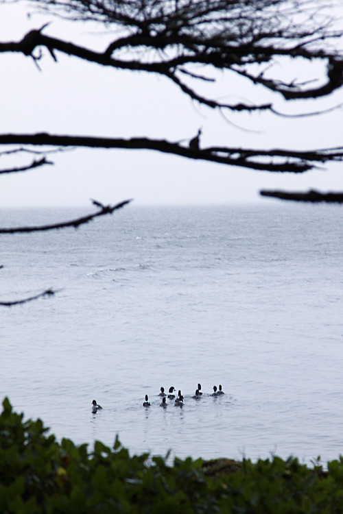 birds on the water near Kasaan, Alaska