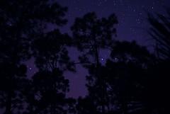 Dew - No Hedgehog (Zoom Lens) Tags: trees tree pine night forest dark stars star darkness pines nightsky starlight starlightstarbright johnruss