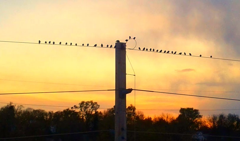 I'm a sucker for birds on a wire against the sunset