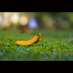 I heard the sound of fall (-clicking-) Tags: lighting autumn light green fall nature leaves yellow leaf dof natural bokeh fade fading withered colorphotoaward mathu 100commentgroup bestcapturesaoi