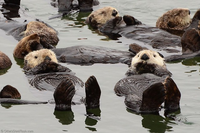 Two Sea Otters Wake Up and Need Something to Talk About
