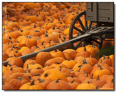 Surrounded (Lisa-S) Tags: autumn orange ontario canada wagon lisas pumpkins invited caledon 50d 4682 downeysfarm copyright2011lisastokes getty2011 flickropen getty20111108