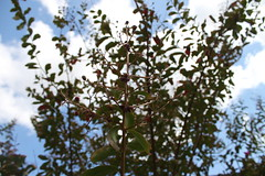 (redlightahead) Tags: nature outdoor shrubbery
