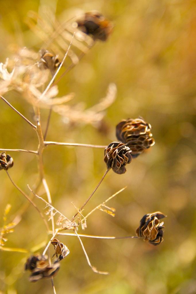 seedheads  607