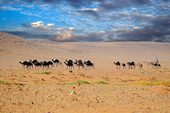 Convoy (SAUD ALRSHIAD) Tags: camera sunset sky cloud color sahara nature colors landscape photography photo sand women desert kingdom arabic camel saudi arabia convoy riyadh arabi yallow ksa saud saudia 2011     desret camil animul  landscab kingdoom flickraward d7000  alrshiad msawr  saudarshiad saudalrshiad 7000 7000