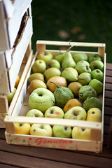 Pick one (| Les Hirondelles |) Tags: show wood autumn italy stilllife food como green fall apple nature fruits closeup canon countryside stand italian dof pears natural bokeh box traditional country farming harvest 50mm14 fresh sugar delicious health pear apples organic activity fruitstand crate sweetness bounty rare flowershow freshness healthyfood cernobbio comolake freshfruit fruitbox fruitcrate organicagriculture organicfarming humanactivity ancientactivity fruitshow tocultivate organicfruits traditionalactivity rarefruits ancientfruits woddencrate leshirondellesphotography oticolario tofarm wintryfruits woddenboxagriculture