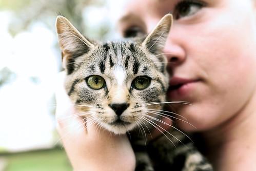 Pioneer Cat Edit