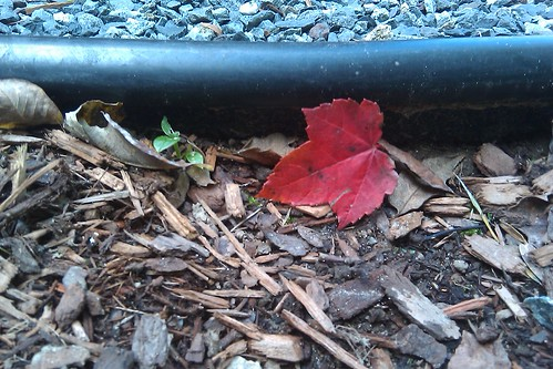 Red leaf down