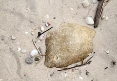 Quartzite with Chatter Marks (sandy richard) Tags: usa newyork unitedstates geology wildwood wadingriver wildwoodstatepark sandyrichard longislandgeology sandrarichard