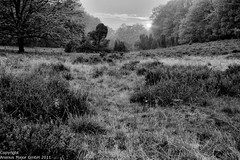 """Autumn - Landscape View"" 5169 (jagpot) Tags: leica autumn bw blackwhite nikon sonnenuntergang herbst summicron sw schwarzweiss landschaft heide blackdiamond primelens d3s kodakiso32panatomic r50f20"
