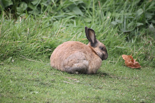 A Cute Little Bunny That Likes Leaves and Grass In the Field