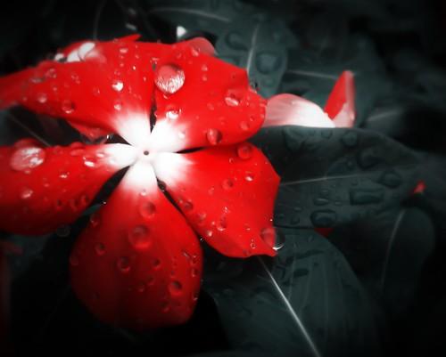 123/365- Rain by elineart