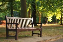 Un dolce ricordo / In loving memory (Explore!!!) (Holland Park, London, England) (AndreaPucci) Tags: uk london bench explore londra regnounito hollandpark panchina canoneos400 canon50mmf14usm andreapucci